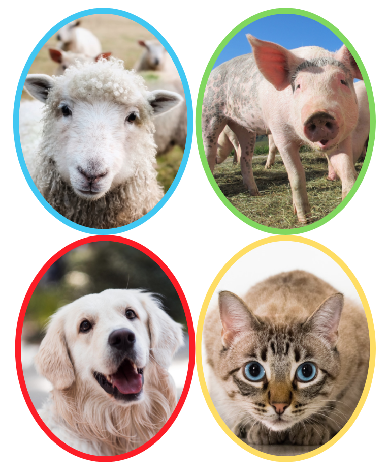Loomadega rühmadesse